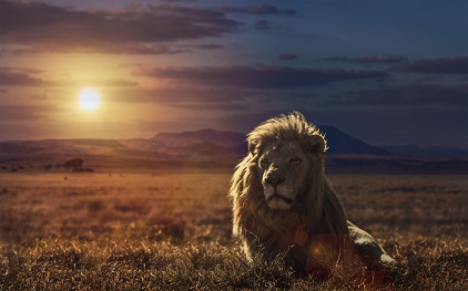 majestic-lion-king-wallpaper