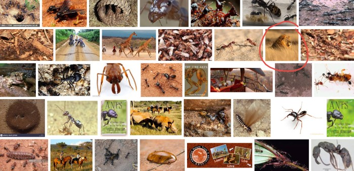 ants google search